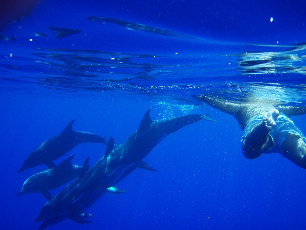 swimming with dolphins madeira