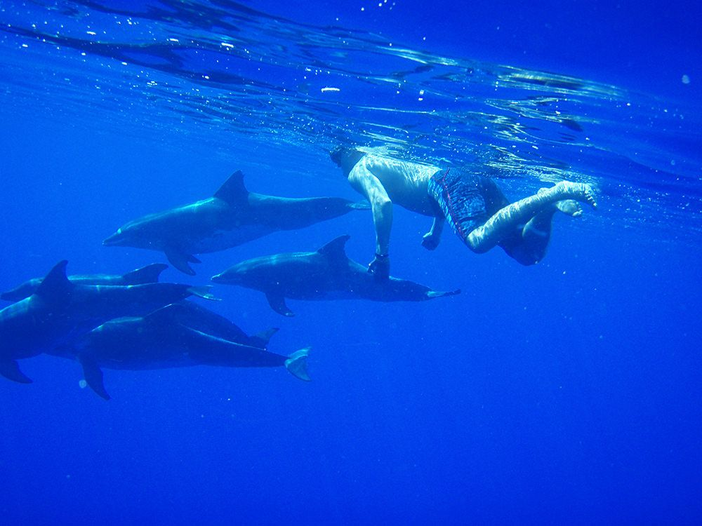 dolphins in madeira